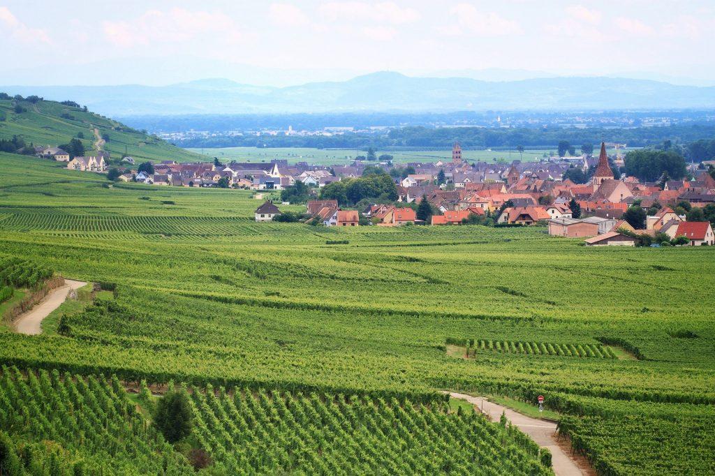 wijngaard elzas