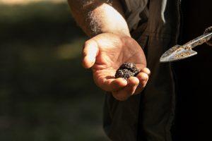 alles wat je moet weten over de truffel