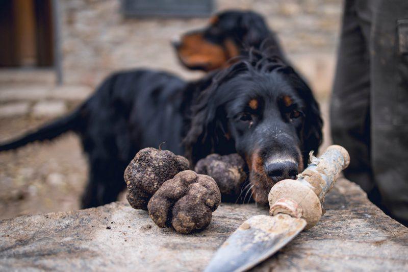 truffels zoeken